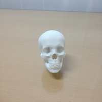 Small gear lever skull 3D Printing 103649