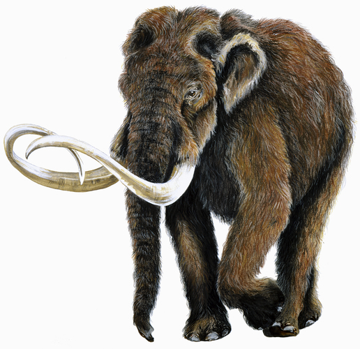 Comparing Ice Age Mammals 3D Print 115733