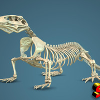 Small Komodo Dragon Skeleton 1:5 Scale 3D Printing 130038