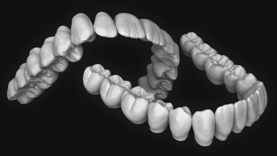 Dental anatomy (upper and lower jaw) 3D Print 135438