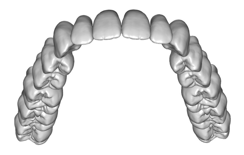 Teeth anatomy and morphology (upper and lower jaw) 3D Print 135442