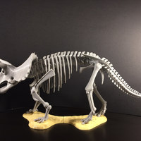 Small Triceratops prorsus Skeleton 3D Printing 148495