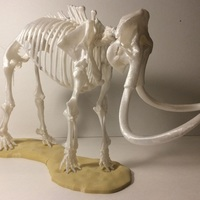 Small Woolly Mammoth Skeleton 3D Printing 148507