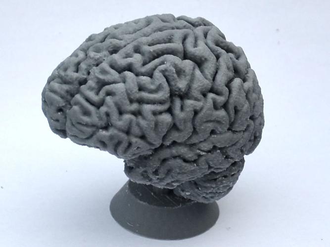 3D Printed Human Brain by krmela | Pinshape