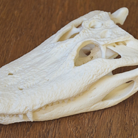 Small Alligator Skull 3D Printing 160638