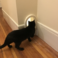 Small Cat Door 3D Printing 162397