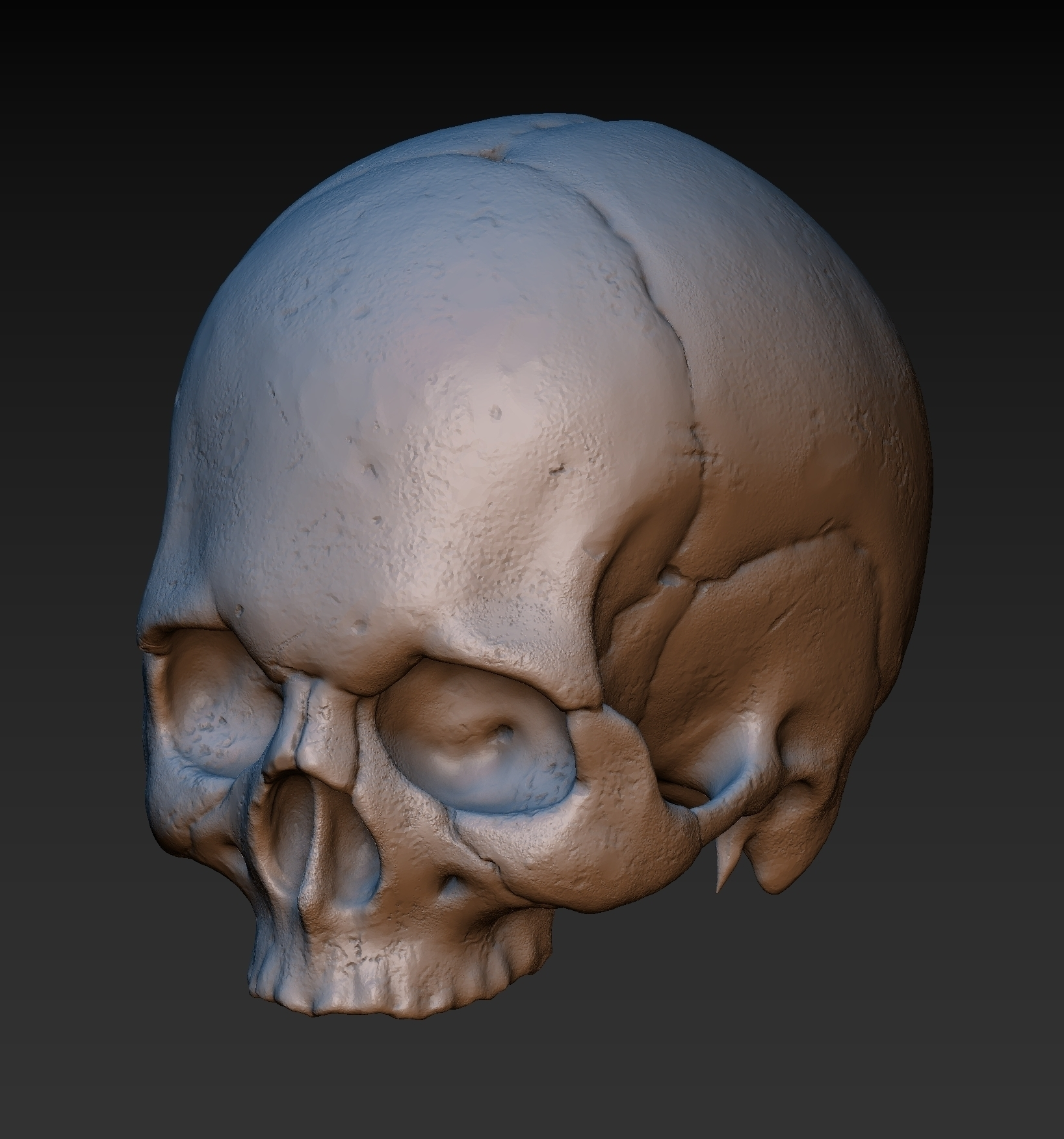 Skull  Without the lower jaw  @ Pinshape