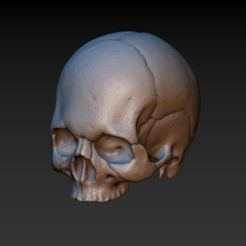 Skull. Without the lower jaw.  3D Print 165901