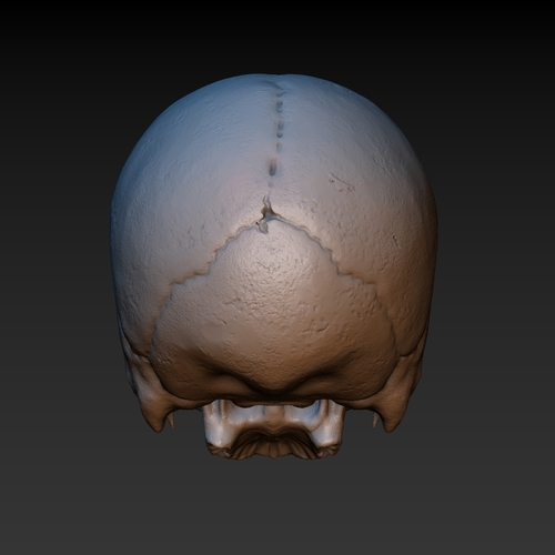 Skull. Without the lower jaw.  3D Print 165904