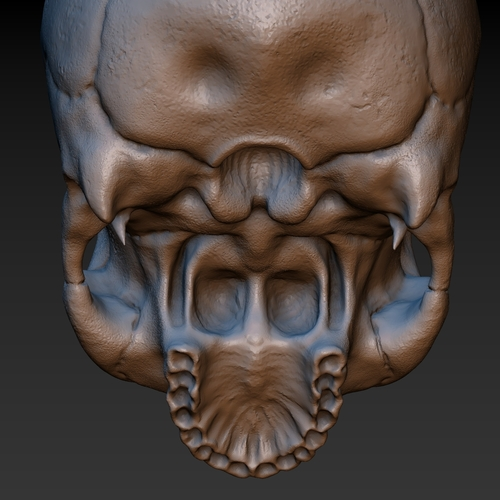 Skull. Without the lower jaw.  3D Print 165911