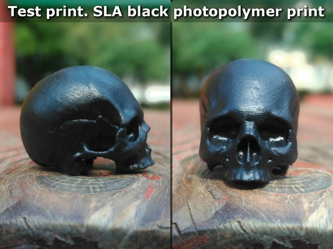 Skull. Without the lower jaw.  3D Print 165914