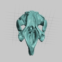 Small Manatee Skull and Mandible High Resolution Scan 3D Printing 166749