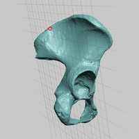Small High Resolution Human Female Pelvis Scan 3D Printing 166758