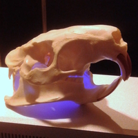 Small Coypu (Nutria) River Rat Original Skull Scan 3D Printing 166765