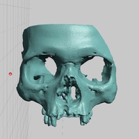 Small Partial Human Skull, African Ancestry, Facial Region Scan 3D Printing 166768