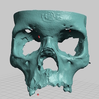 Small Partial Human Skull, Asian Ancestry, Facial Region Scan 3D Printing 166769