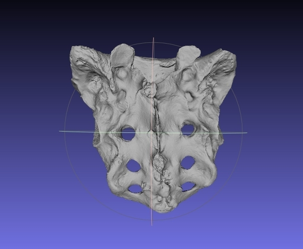 Human Skeleton Sacrum Bone, Real Anatomy Scan 3D Print 166778