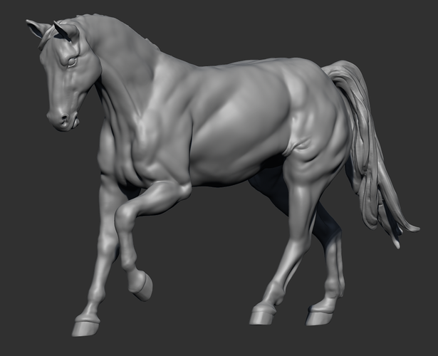 Anatomical Horse 3D Print 180336