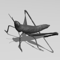 Small Cricket 3D Printing 181407