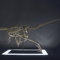 Small Full Size Velociraptor Skeleton Part05/05 3D Printing 184850