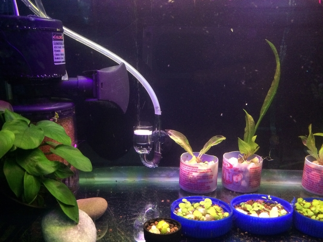 Co2 diffuser holder for aquarium 3D Print 185153