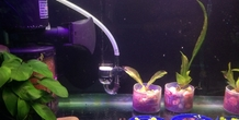 3D Printed Co2 diffuser holder for aquarium by japsol3d | Pinshape
