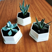 Small Flower Pot for Succulents 3D Printing 186905