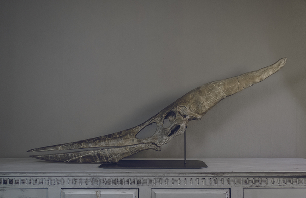 Medium Full Size Pteranodon Fossil Skull  Part01/06 3D Printing 193514