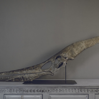 Small Full Size Pteranodon Fossil Skull Part02/06 3D Printing 193520