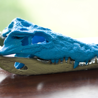 Small Alligator Skull with independent Jaw 3D Printing 207195
