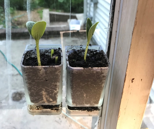 Window mounted seed starter 3D Print 208807
