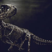 Small Life size baby T-rex skeleton - Part 08/10 3D Printing 218280