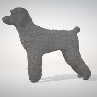 Small Caniche  3D Printing 233206
