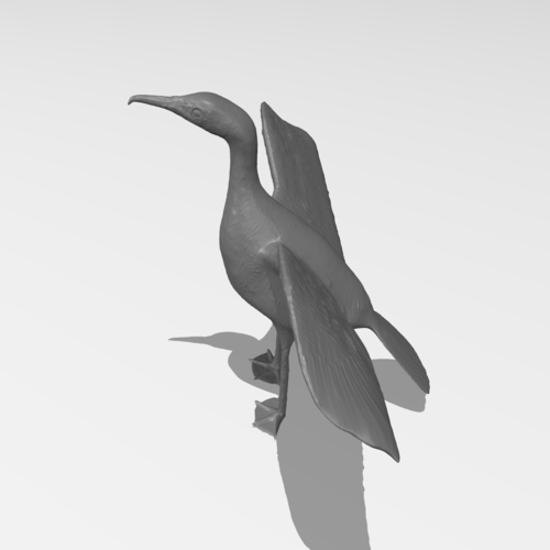 Great Cormorant 3D Print 249894