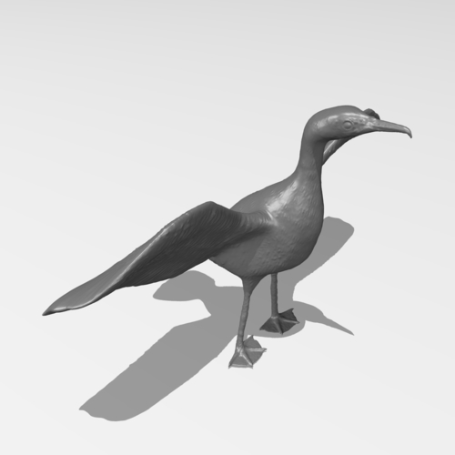 Great Cormorant 3D Print 249898