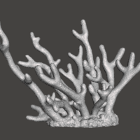 Small Staghorn Coral 3D Printing 259516