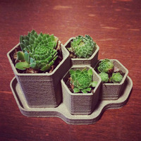 Small Hex Planter 3D Printing 26579