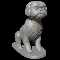Small Seated Shih Tzu  3D Printing 285533
