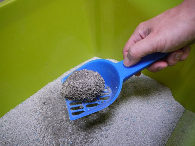 Cat Litter Scoop 3D Print 30174