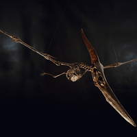 Small Pteranodon skeleton Part03/03 3D Printing 304424