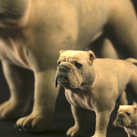Small bulldog 3D Printing 505