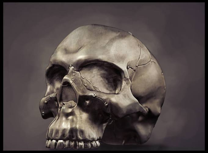 Anatomy of head bones