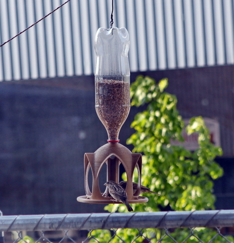 Bird Feeder for PET Bottle, Bird House 3D Print 81899