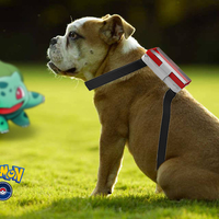 Small pokemon go doggysitter 3D Printing 92448
