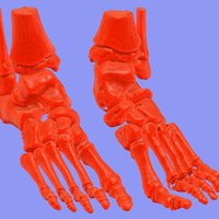 Small foot bone 3D Printing 94795