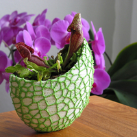 Small Organic flower pot / Voronoi Vase (2-color) 3D Printing 96799
