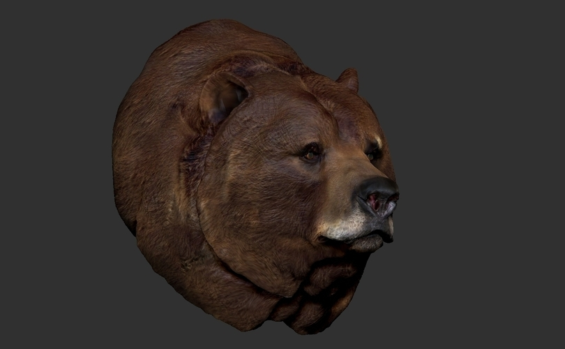 Grizzly bear bust 3D Print 97400