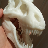 Small The T-Rex Skull 3D Printing 11382