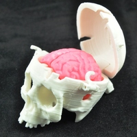 Small Boneheads: Skull Box w/ Brain - via 3DKitbash.com 3D Printing 12466