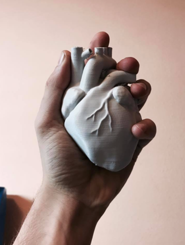 Anatomical Heart 3D Print 15950
